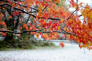 october snow 6 copy