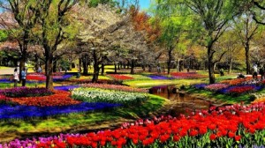 trees_multicolor_flowers_scenic_park_m73595